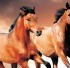 ECVIPUR, şampon din extract de plante, pentru cai