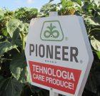Fermierii campioni la floarea-soarelui cu hibrizii Pioneer