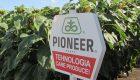 Campionii marilor recolte din centrul ţării, cu hibrizii de floarea soarelui Pioneer