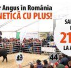 Principalul eveniment Angus al anului – Licitația de Bovine Aberdeen Angus în România!