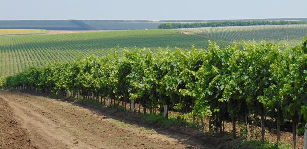 basf viticultura