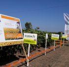 Euralis Master Field – performanţă dovedită în culturile agricole