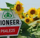 Fermierii campioni la floarea-soarelui din județul Brăila, cu hibrizii Pioneer