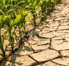 Fermieri, solicitați primăriilor convocarea Comisiei pentru constatarea și evaluarea pagubelor cazate de secetă