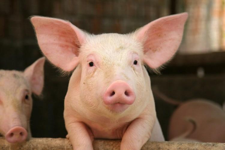 porc2