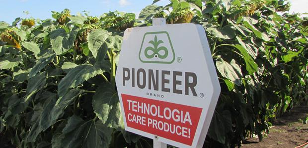 pioneer fl