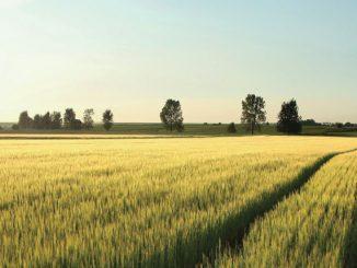 FMC cereale1