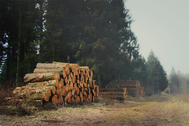 lemn padure