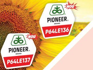 Pioneer Floarea Soarelui 800