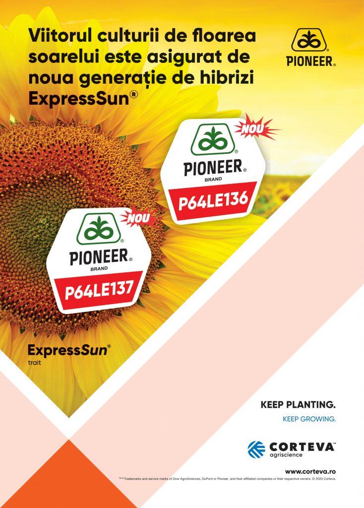 Pioneer Floarea Soarelui nou