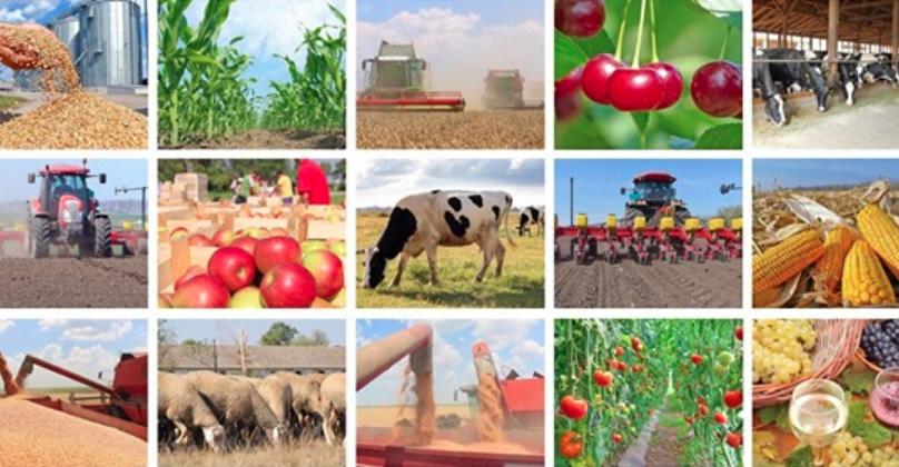 CFRo agroalimentar