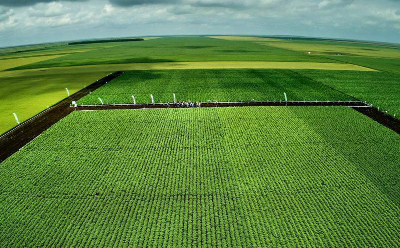Field Romania